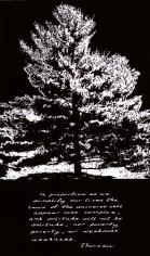 white_pine_thoreau