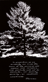 white_pine_thoreau
