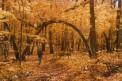 Under a bridge of Maples
