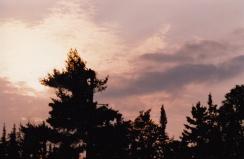 pine_sunset