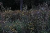 wildflowers_at_sunrise
