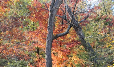 interstate_park_fall