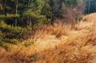 Autumn grass near Babbitt, MN