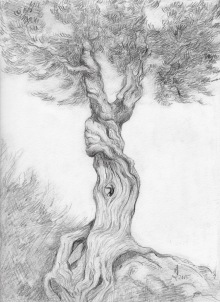 Something Like the Witch Tree