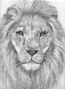African_Lion_drawing