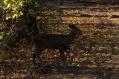 deer_1501
