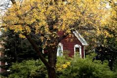 At home among trees