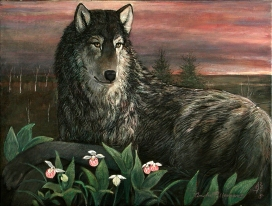 Minnesota Timber Wolf